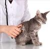Ветеринарные клиники в Лукоянове